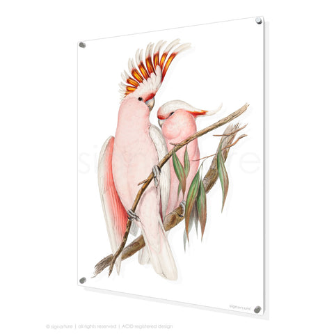 bird perspex art print pink-cockatoo