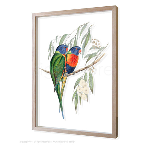 rainbow-lorikeet 3D-framed perspex art