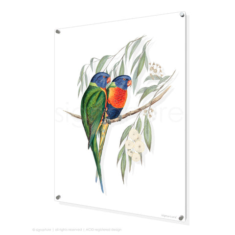 bird perspex art print rainbow-lorikeet