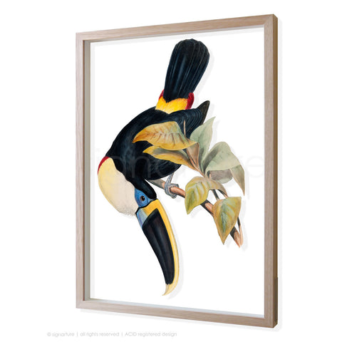 toucan-I 3D-framed perspex art