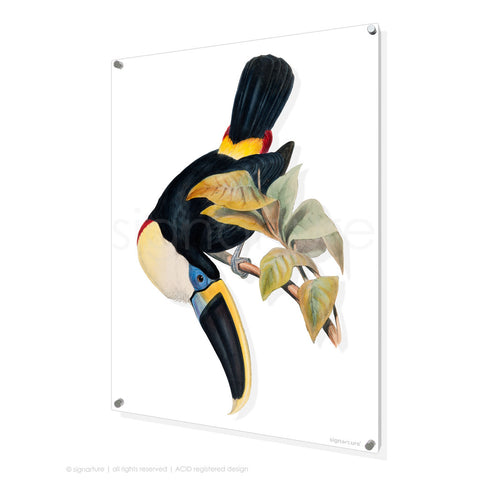 bird perspex art print toucan-I