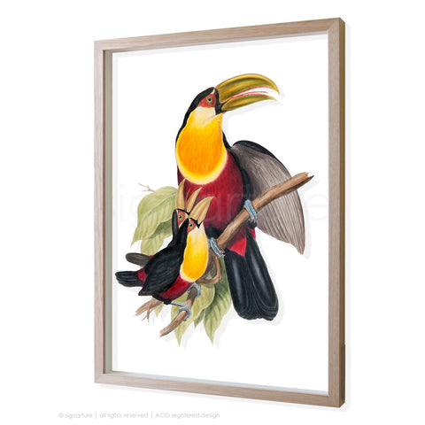 toucan-III 3D-framed perspex art