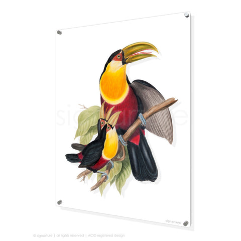 bird perspex art print toucan-III