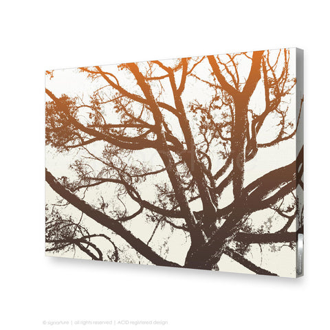 tree canvas art balmoral orange rectangular