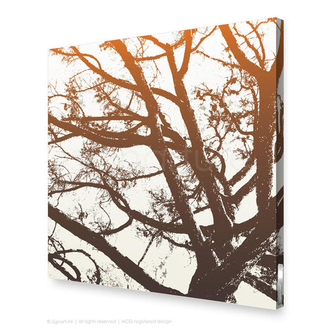 tree canvas art balmoral orange square