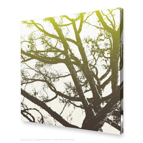 tree canvas art balmoral green square