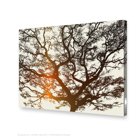tree canvas art burrawang orange rectangular