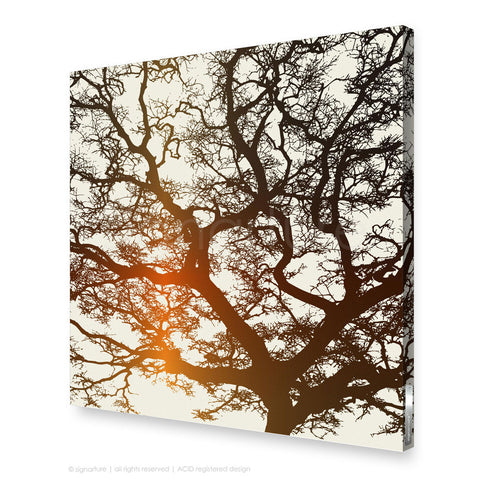 tree canvas art burrawang orange square
