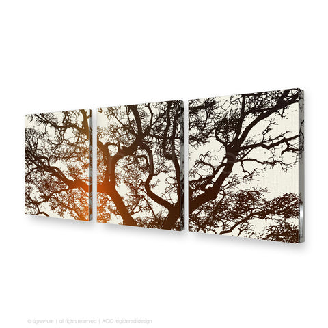 tree canvas art burrawang orange triptych