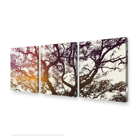 tree canvas art burrawang magenta triptych