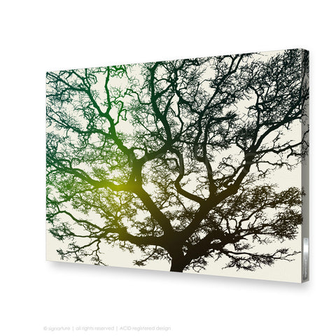 tree canvas art burrawang green rectangular