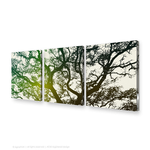 tree canvas art burrawang green triptych