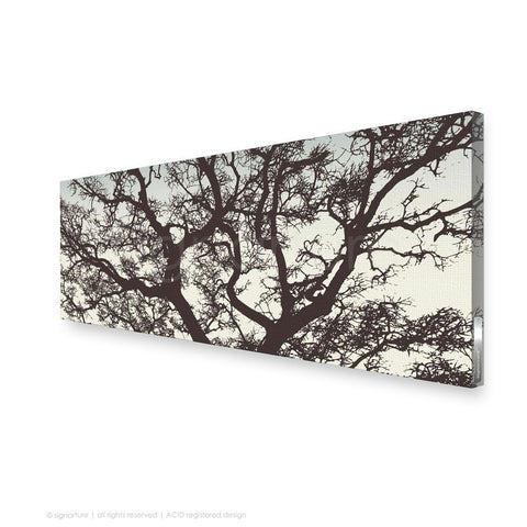tree canvas art burrawang brown panoramic
