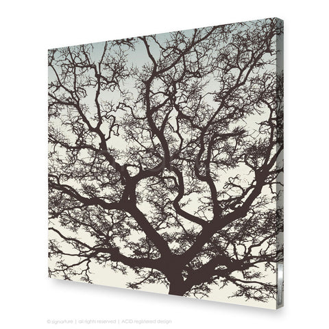 tree canvas art burrawang brown sqaure