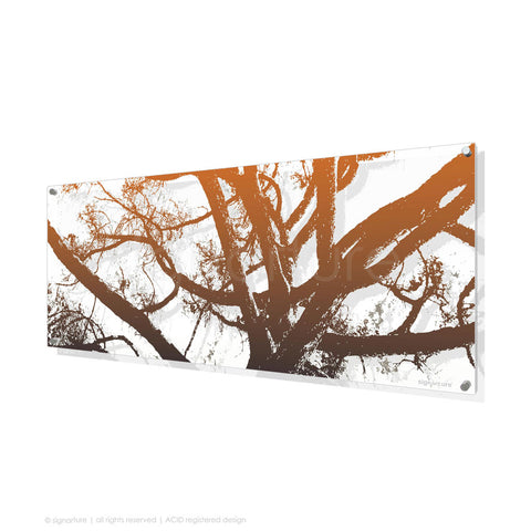 tree perspex art balmoral orange panoramic