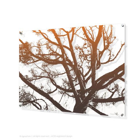 tree perspex art balmoral orange rectangular