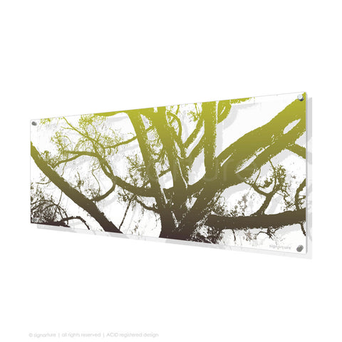 tree perspex art balmoral green panoramic