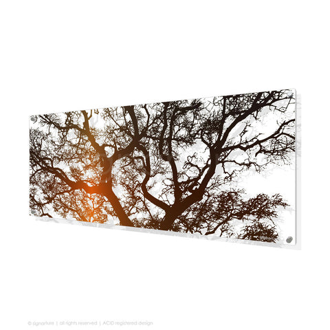 tree perspex art burrawang orange panoramic