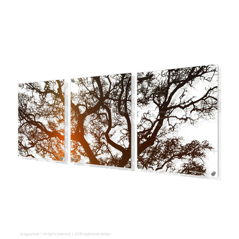 tree perspex art burrawang orange triptych