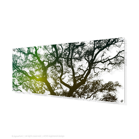 tree perspex art burrawang green panoramic