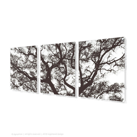 tree perspex art burrawang brown triptych