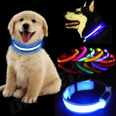 LED DOG Collar - Doggy Dog Supplies