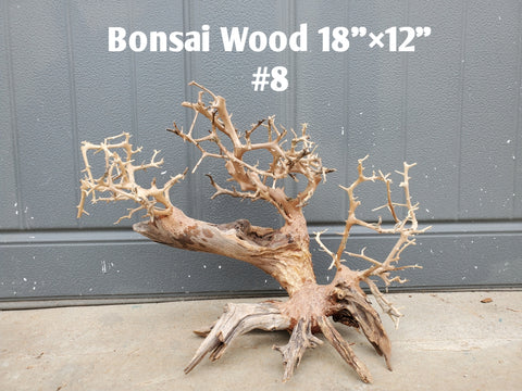 "Bonsai Driftwood 18"" #08 (Free Shipping)"