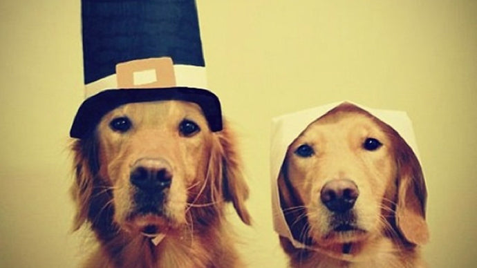 Do's and Don'ts of Thanksgiving with Your Pet