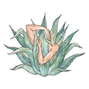 Agave Love - Jennifer Pate - 8x10""
