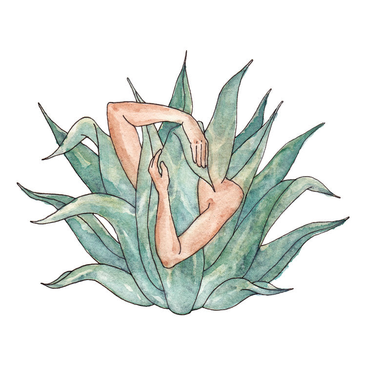Agave Love - Jennifer Pate - 5x7""