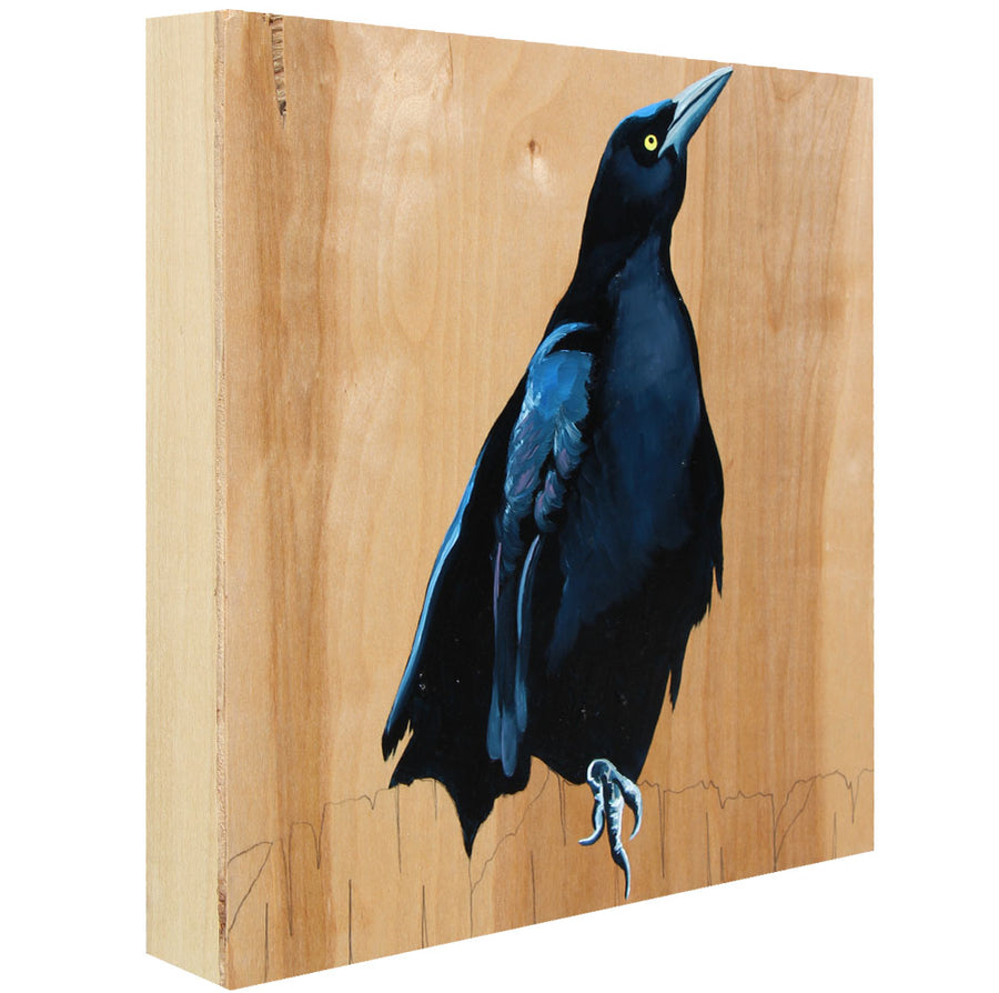 Grackle #13 - Carly Weaver - 12 x 12""