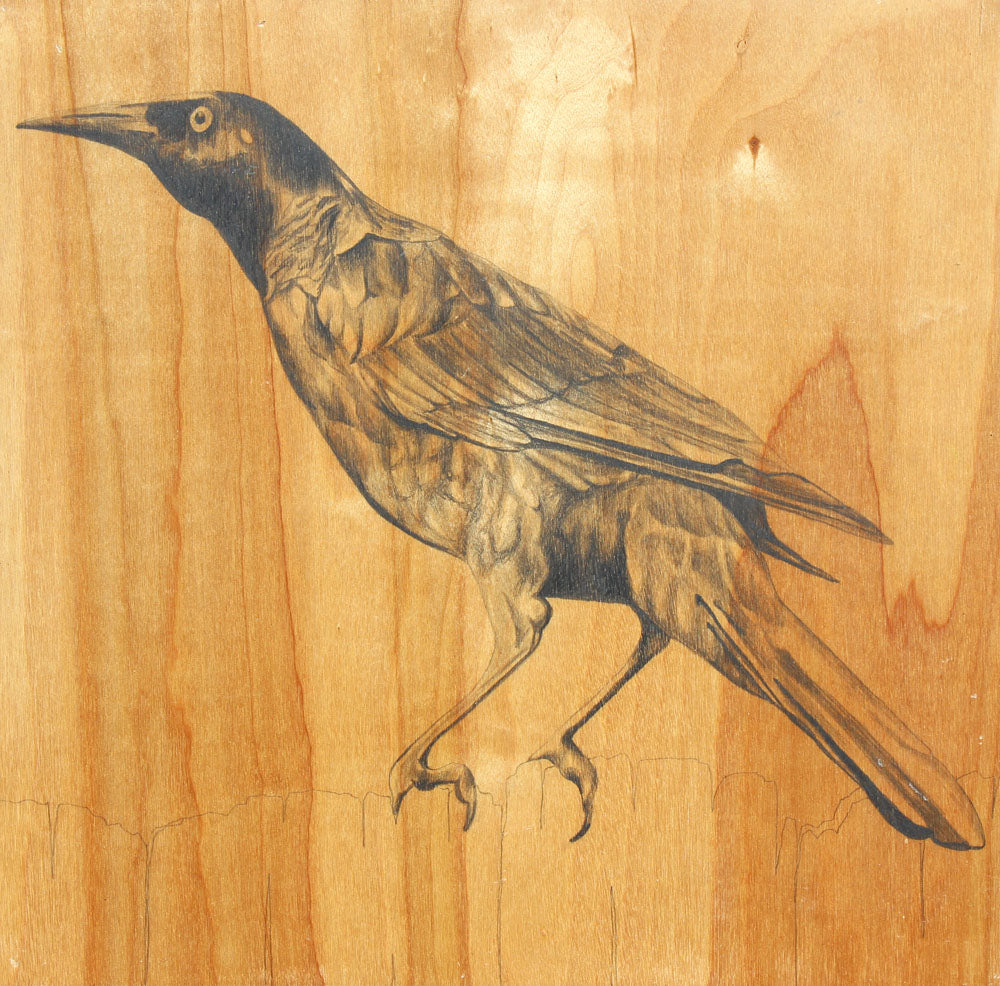 Grackle #1 - Carly Weaver - 12 x 12""