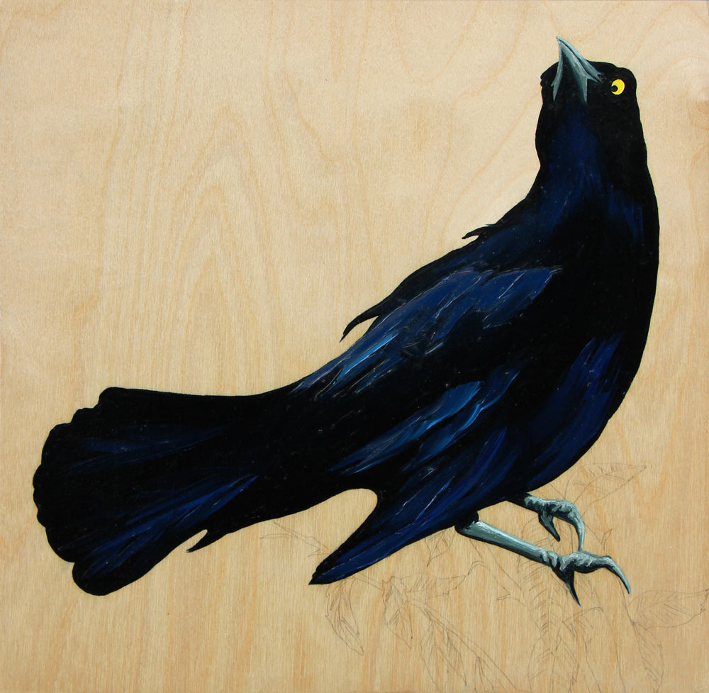 Grackle #23 - Carly Weaver - 12 x 12""