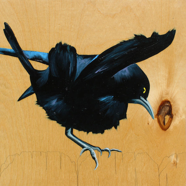 Grackle #25 - Carly Weaver - 12x12""