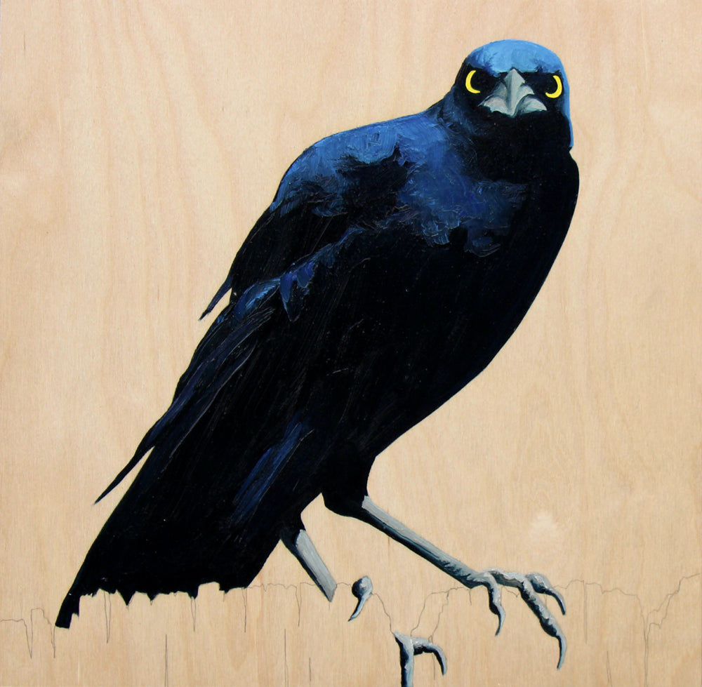 Grackle #3 - Carly Weaver - 12 x 12""
