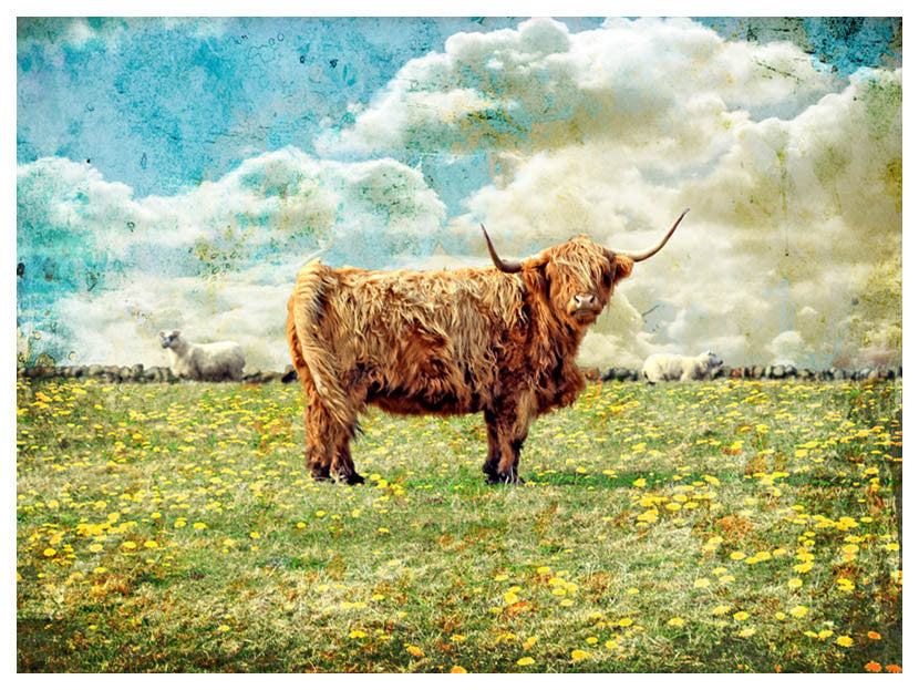 Highland Bull by Jake Bryer - Austin Art Garage