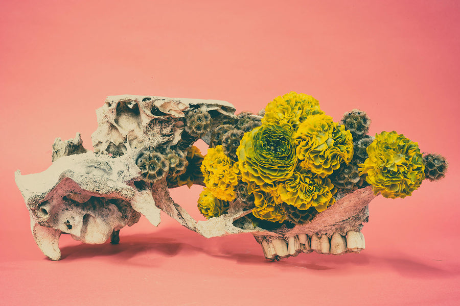 Skull with Flowers - Antonio Bond