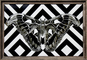 Windows to the Soul (Atlas Moth) - Flip Solomon - 39 x 27""