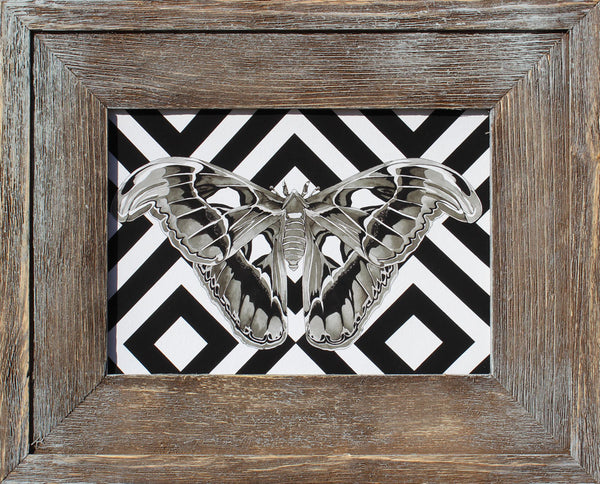 "Windows to the Soul (Atlas Moth) - Flip Solomon - 12x15"" Framed"