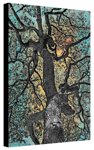 Zilker Tree Study 1 - Jake Bryer