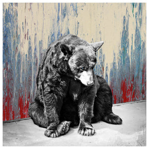 Black Bear Blues - Jake Bryer
