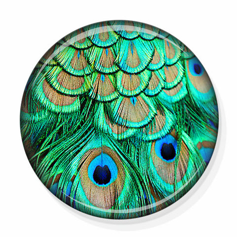 Peacock Feathers Mirror by Pretty Picture Gifts