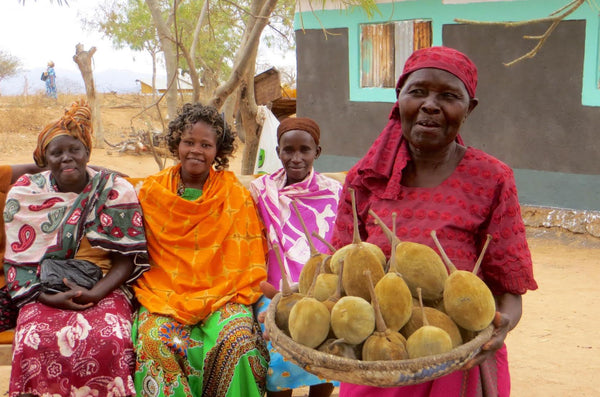 women in ghana with their harvest of organic wild baobab fruit powder for kaibae