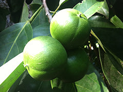 Cacay fruit on the tree