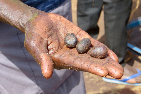 a hand holding sustainably harvested shea nuts for kaibae