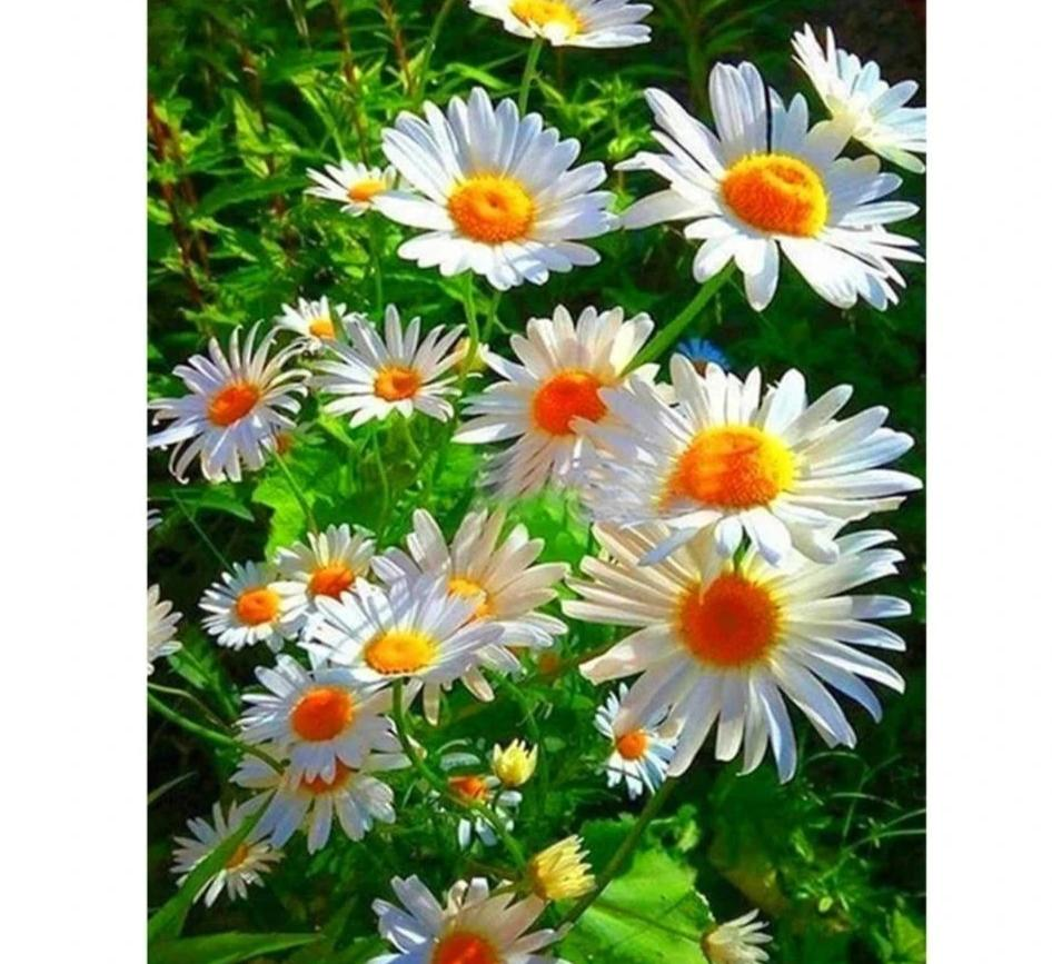 Daisy Flower diamond painting Kit