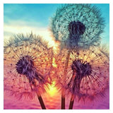 Dandelion Sunrise - Diamond Painting Kit
