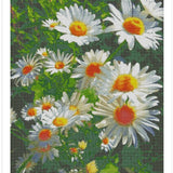 Daisy Flower - Diamond Painting Kit