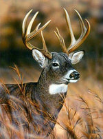 Sunshine Deer - Diamond Painting Kit