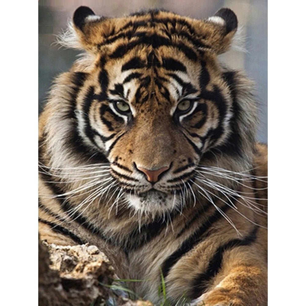 Regal Tiger - Diamond Painting Kit